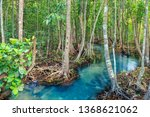 mangrove and crystal clear... | Shutterstock . vector #1368621062