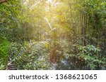 mangrove and water stream canal ... | Shutterstock . vector #1368621065