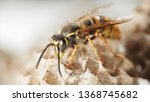 Macro Of Wild Wasp Resting In...