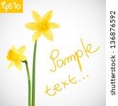 Vector Illustration Of Daffodils