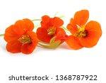 nasturtiums isolated on white   Shutterstock . vector #1368787922