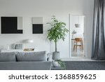 Big green plant in concrete pot in bright living room interior with grey furniture