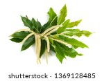 Chestnut Branch With Flowers...