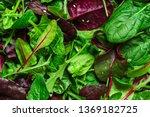 Healthy Salad  Leaves Mix Salad ...
