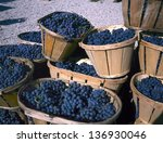 Blue wine grapes in wicker baskets after the harvest at the vineyard - stock photo