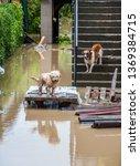 Flood   Hurricane  Aftermath...