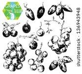 hand drawn illustrations of... | Shutterstock .eps vector #136943948