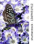 the name of the butterfly is... | Shutterstock . vector #1369451912