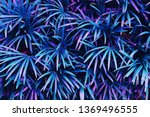 tropical leaves  exotic palm... | Shutterstock . vector #1369496555