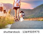 Stock photo woman doing daily exercise jogging on the public park road with puppy breed dog 1369505975