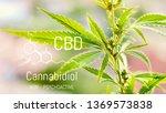 cannabis of the formula cbd ...   Shutterstock . vector #1369573838