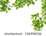 Forest Branch Pears Isolated O...