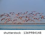 flock of  bright pink african... | Shutterstock . vector #1369984148