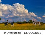low angle view on herd of... | Shutterstock . vector #1370003018
