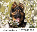 happy  hairy dog staring... | Shutterstock . vector #1370012228