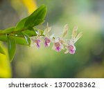 orchid in thailand blurred... | Shutterstock . vector #1370028362