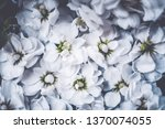 botanical backdrop  nature and... | Shutterstock . vector #1370074055