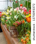 flowers in green house. floral... | Shutterstock . vector #1370093372