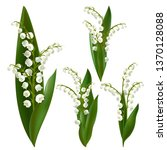 convallaria majalis   lilly of... | Shutterstock .eps vector #1370128088