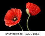 Two Poppys Isolated On...
