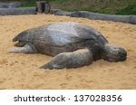 Large Wooden Sea Turtle In The...