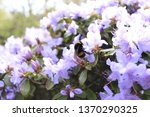 beautifully captured bee... | Shutterstock . vector #1370290325
