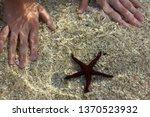 colorful underwater scene.... | Shutterstock . vector #1370523932
