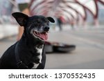 Small Black Dog Sitting On A...
