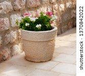 Geranium. Pot With Bushes Of...