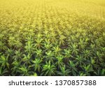 aerial view of palm oil... | Shutterstock . vector #1370857388