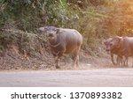 a portrait of kid buffalo... | Shutterstock . vector #1370893382
