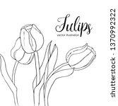 vector black and white tulips... | Shutterstock .eps vector #1370992322