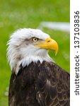 The Gaze Of The Eagle