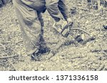 worker using chain saw and... | Shutterstock . vector #1371336158