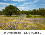 Field Of Flowers In Front Of...