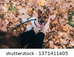 girl holding a dog's snout. the ...   Shutterstock . vector #1371411605