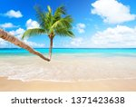 coconut palm trees against blue ... | Shutterstock . vector #1371423638