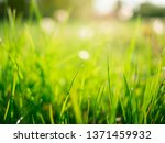 spring green grass blurred... | Shutterstock . vector #1371459932