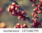 spring blossom background. ... | Shutterstock . vector #1371482795