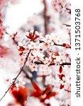 botanical beauty  dream garden... | Shutterstock . vector #1371503768