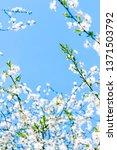 floral beauty  dream garden and ... | Shutterstock . vector #1371503792