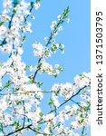 floral beauty  dream garden and ... | Shutterstock . vector #1371503795