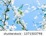 floral beauty  dream garden and ... | Shutterstock . vector #1371503798