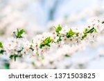 floral beauty  dream garden and ... | Shutterstock . vector #1371503825