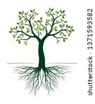 green tree with roots on white... | Shutterstock .eps vector #1371593582