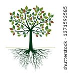 green tree with roots on white... | Shutterstock .eps vector #1371593585