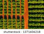 aerial view of orange grove... | Shutterstock . vector #1371606218