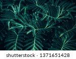 beautiful nature background of... | Shutterstock . vector #1371651428