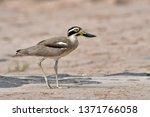 beautiful bird  great thick... | Shutterstock . vector #1371766058