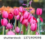 selective  focus  colorful ... | Shutterstock . vector #1371909098